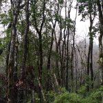 Jornada de plantación de árboles de queule en sector Los Queules comuna de Hualqui